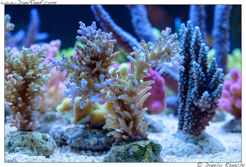 interzoo norimberga 2014 lo stand korallen zucht ed i suoi coralli - acropora