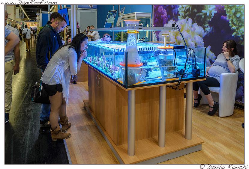 interzoo norimberga 2014 lo stand korallen zucht