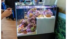 La pianificazione dell'acquario marino: le dimensioni
