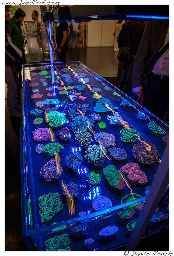 2014_05_interzoo_norimberga_2014_white_corals_037