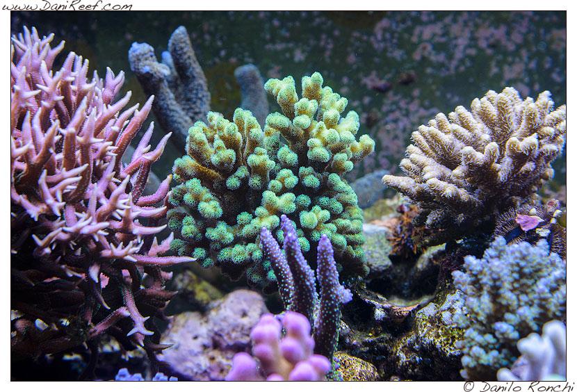 Natura Amica: coralli