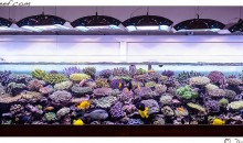 1400 liters for the incredible marine aquarium of Pietro Romano from Italy