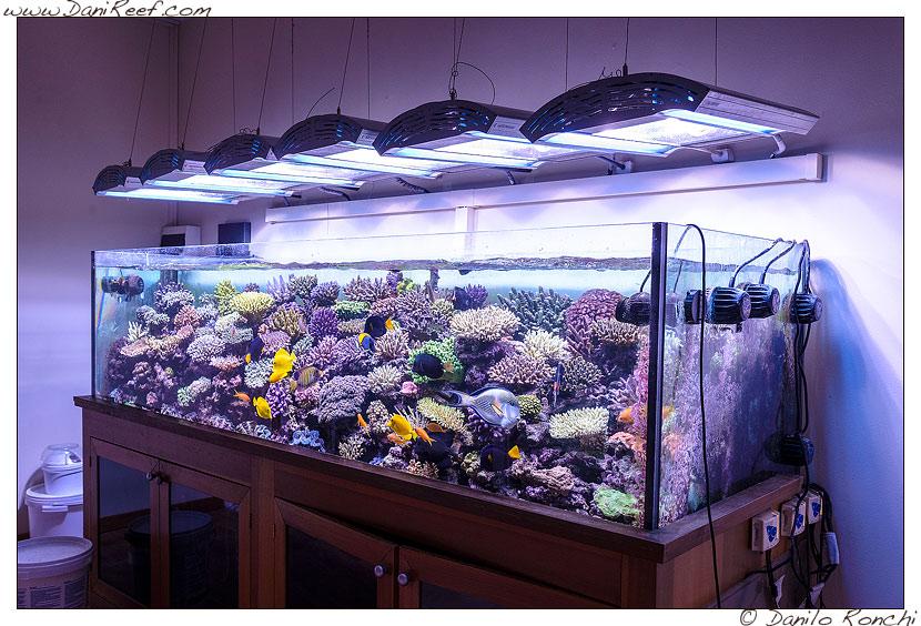 L'acquario marino di Pietro Romano