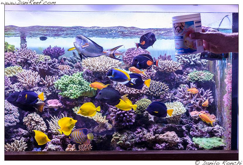 I pesci nell'acquario marino di Pietro Romano