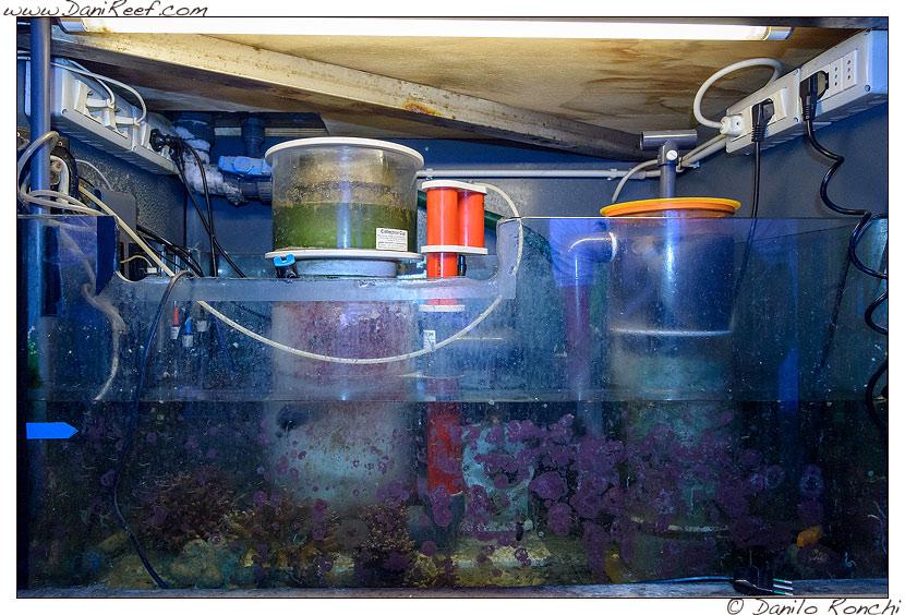 La sump dell'acquario marino di Pietro Romano