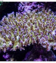 One more thing: le foto subacque dei coralli di Pietro Romano