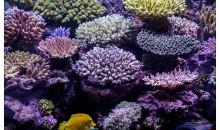 L'incredibile acquario di Pietro Romano – 1400 litri di acropore e pesci
