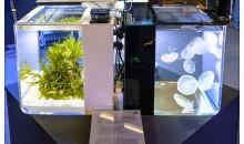 Interzoo 2014: lo stand Reef Eden International dedicato alle meduse ed ai cavallucci marini