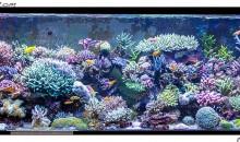 Lo splendido acquario marino di Natura Amica – Roma