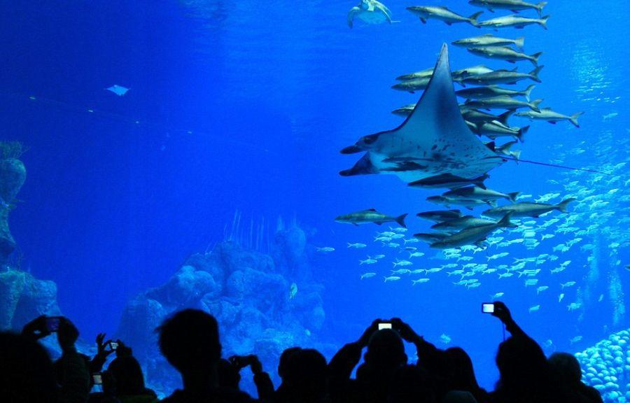 World's-Largest-Aquarium-China's-Hengqin-Ocean-Kingdom-1