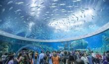 Il più grande acquario del mondo è a Hengquin in Cina