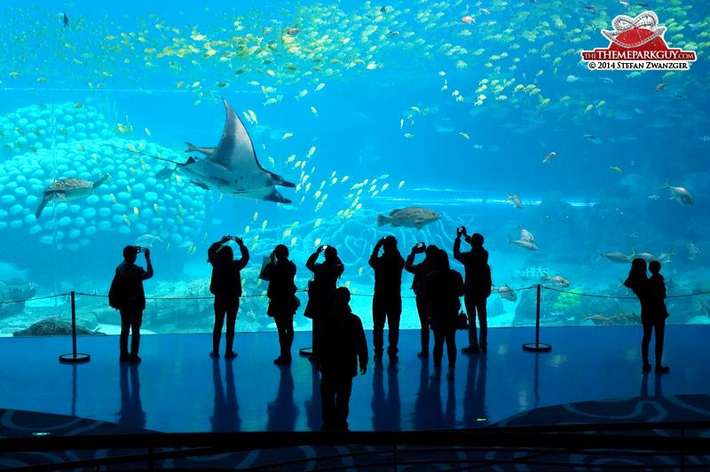 manta-rays-in-zhuhai-big