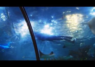 nuotare_acquario