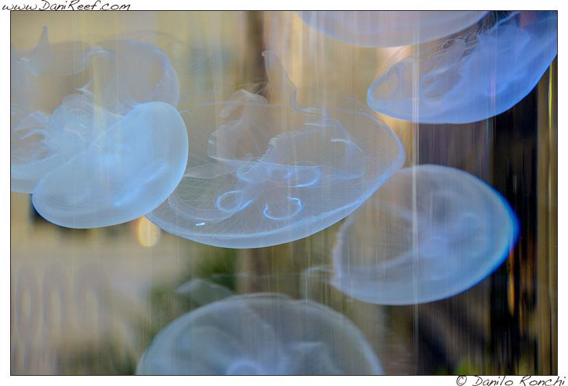 Acquario di meduse allo Stand Prodibio alla fiera Interzoo di Norimberga 2014