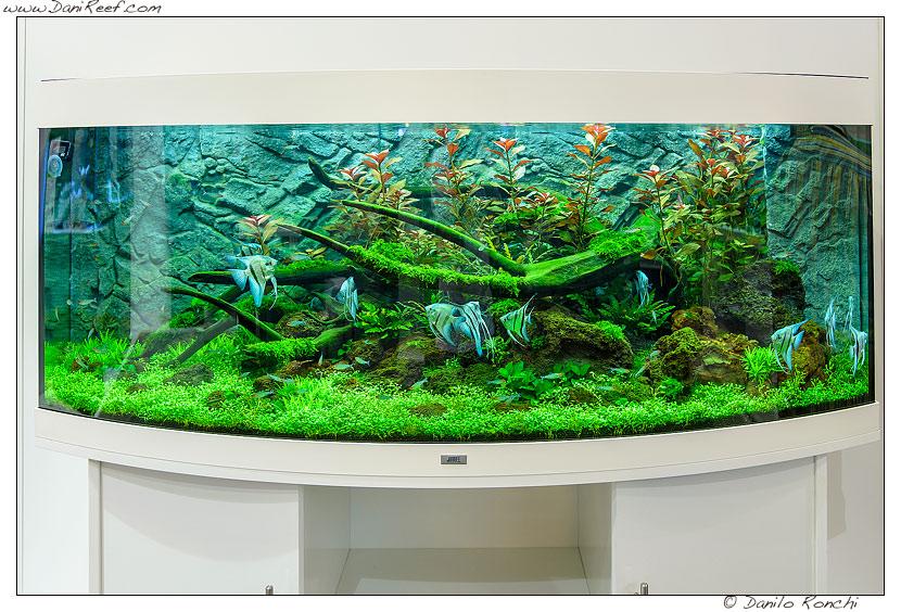 Interzoo 2014 lo stand juwel e gli acquari di acqua dolce for Pesci acqua dolce online