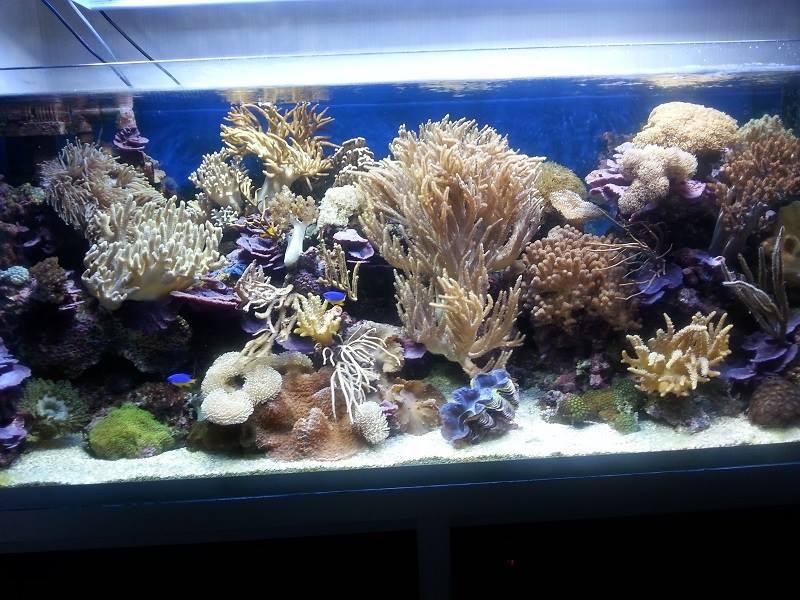 acquario di Flavio Emer