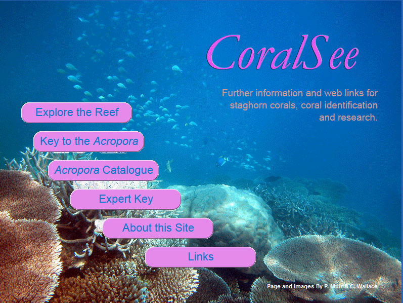 acropora catalogue