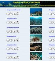 coralli_dal_mondo
