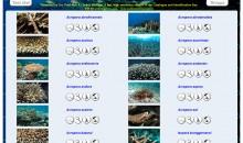 Identificazione delle Acropore gratuito online – un sito tutto da scoprire