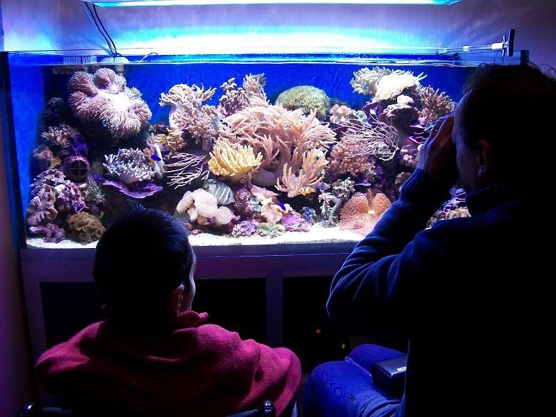 Il disabile zen e l 39 arte della manutenzione dell 39 acquario for Acquario per tartarughe grandi