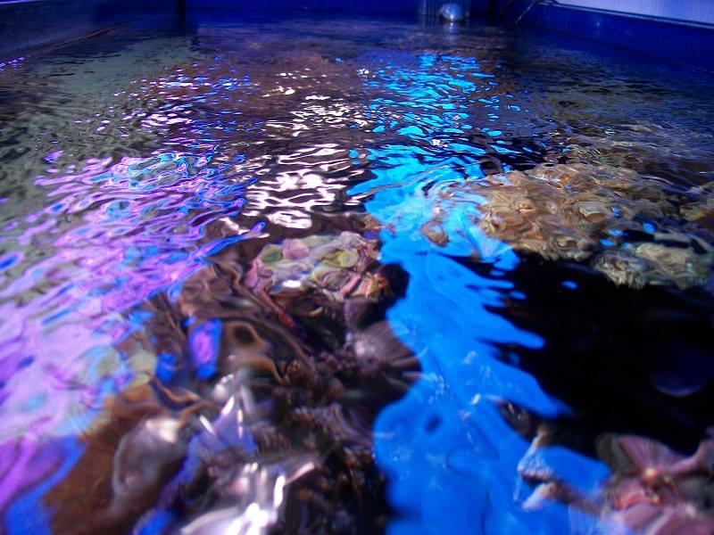 L'acquario di Flavio Emer