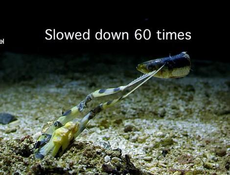 mantis_and_fish