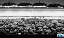 I Coralli ed il Colore… trattato semiserio