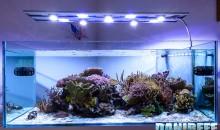 La plafoniera CEAB Aqua&Led in prova nell'acquario di Jonathan Betti – anteprima