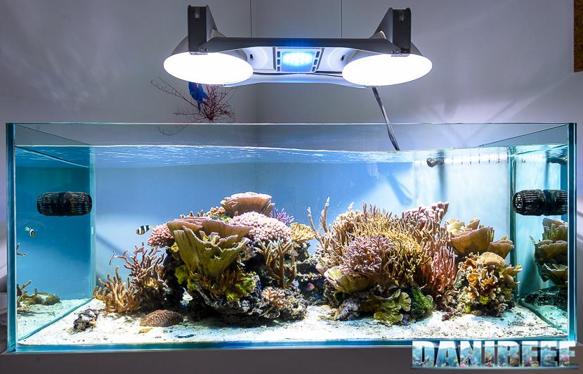 Plafoniere Led Per Acquario Marino : La plafoniera ceab aqua led nell acquario di jonathan betti