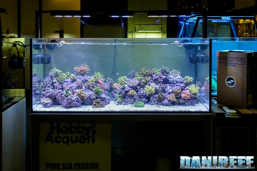 coralli SPS nell'acquario curato da Hobby Acquari per il Petsfestival 2014