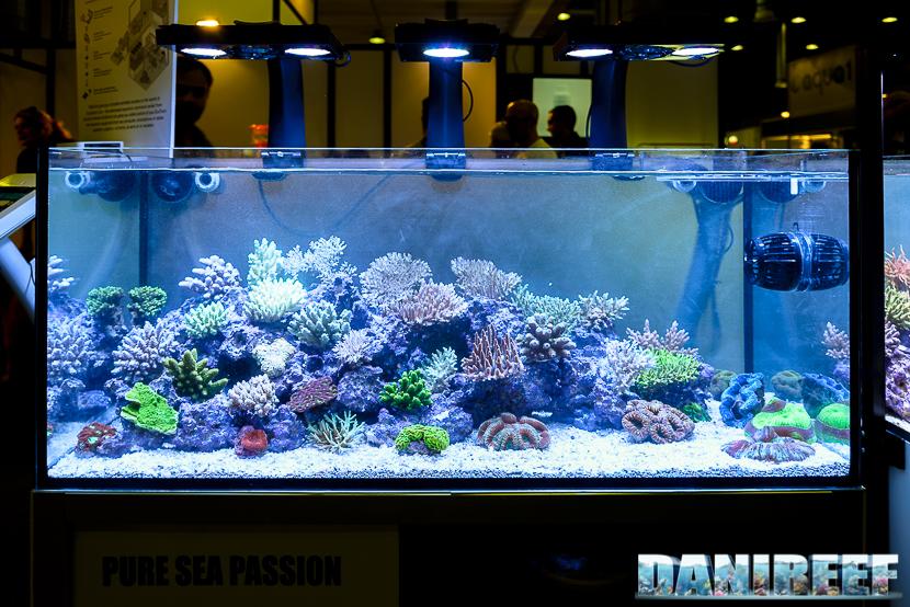 Coralli SPS nell'acquario curato da Hobby Acquari presso Piacenza PetsFestival 2014