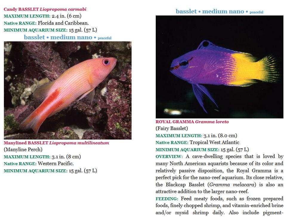 The 101 Best Nano reef Species pagina interna