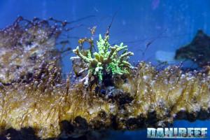 Come sconfiggere i dinoflagellati con il metodo naturale for Acquario marino 300 litri prezzo