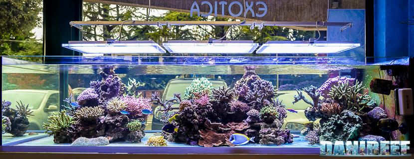 Acquario del negozio Exotica di Pordenone