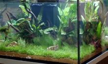 La lampada battericida (UV-C) contro le alghe in acquario