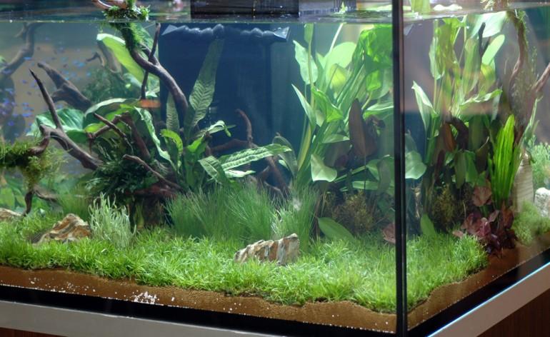 La lampada battericida uv c contro le alghe in acquario for Acquario acqua dolce