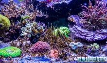 Dinoflagellati: il metodo definitivo per sconfiggerli, veloce, sicuro e gratuito