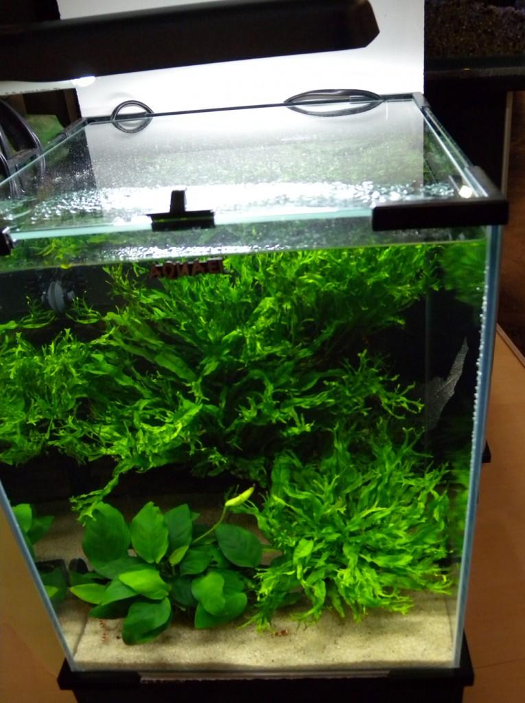 acquario acqua dolce con piante