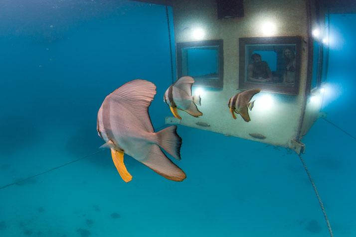 8-underwater-room-Manta-Resort-Pemba-Island-Tanzania-yatzer