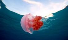 Acquari di meduse – come costruirli e gestirli