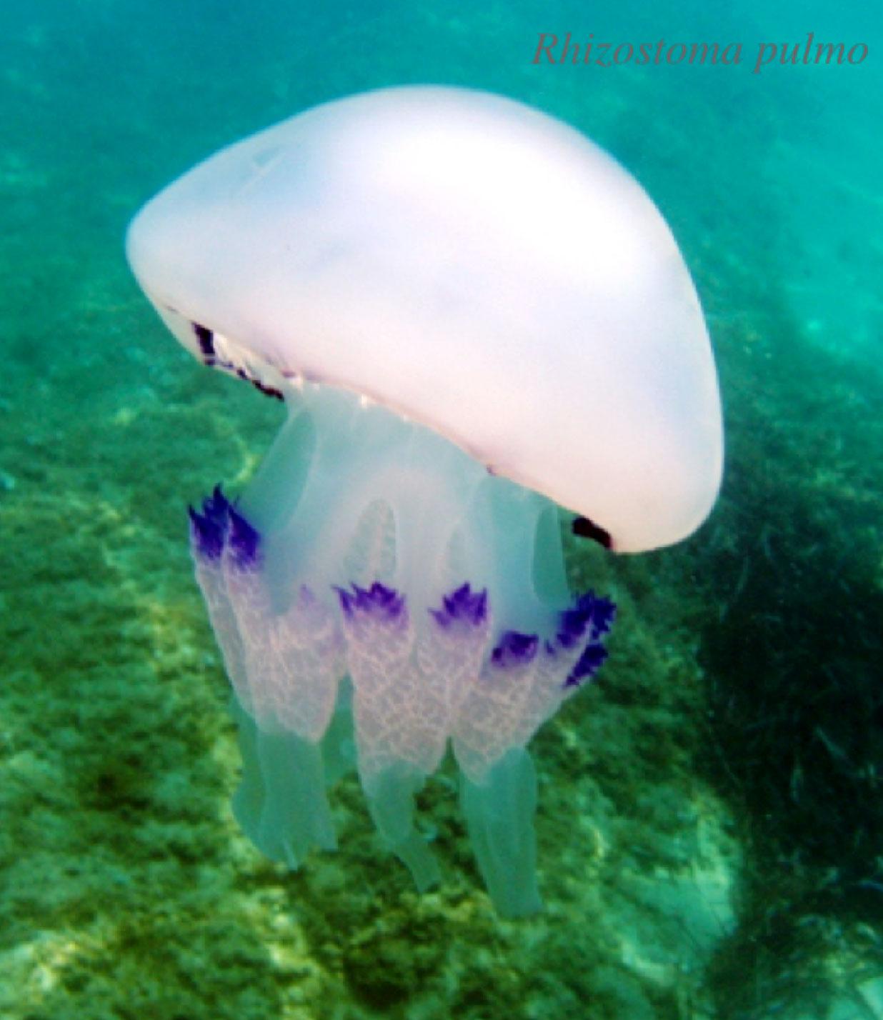 Acquari di meduse come costruirli e gestirli pagina 2 for Arredo acquario acqua dolce
