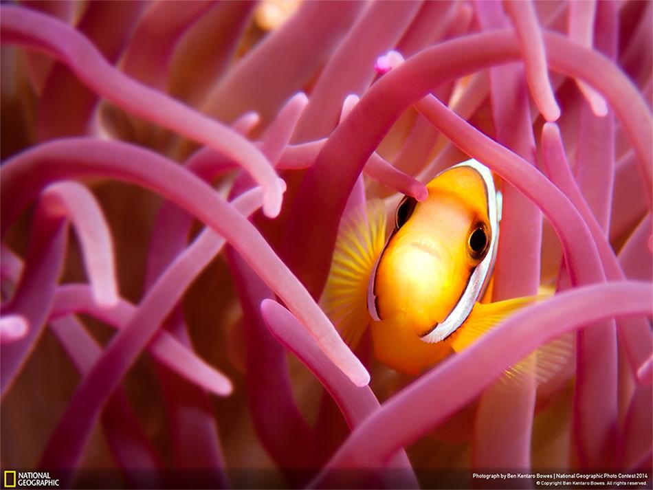Fotografie incredibili di coralli come sfondo del computer for Sfondi desktop grandi