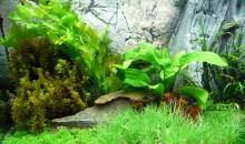 Come gestire la durezza, GH e KH, in acquari di acqua dolce – i valori chimico fisici settima parte