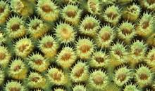 Fotografie incredibili di Coralli come sfondo del computer, tablet o smartphone direttamente dal National Geographic
