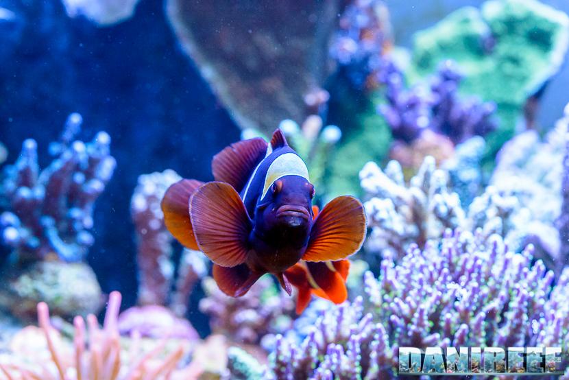 Equo men marino alimento granulare completo per pesci for Acquario per pesci