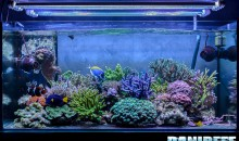 Massimiliano Ghelfi's Great Aquarium