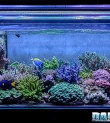 Il coloratissimo acquario marino di Massimiliano Ghelfi
