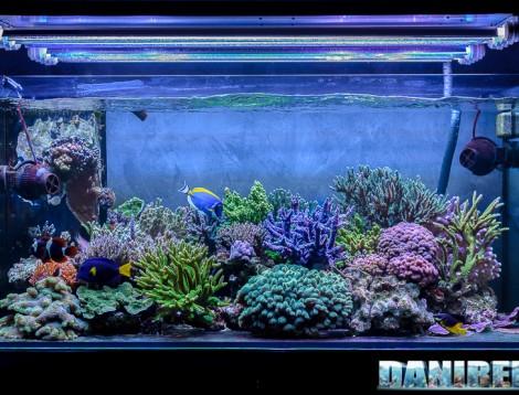 2015_01_DaniReef_Acquario_Massimiliano_Ghelfi_coralli, layout, riflessi, sps_01