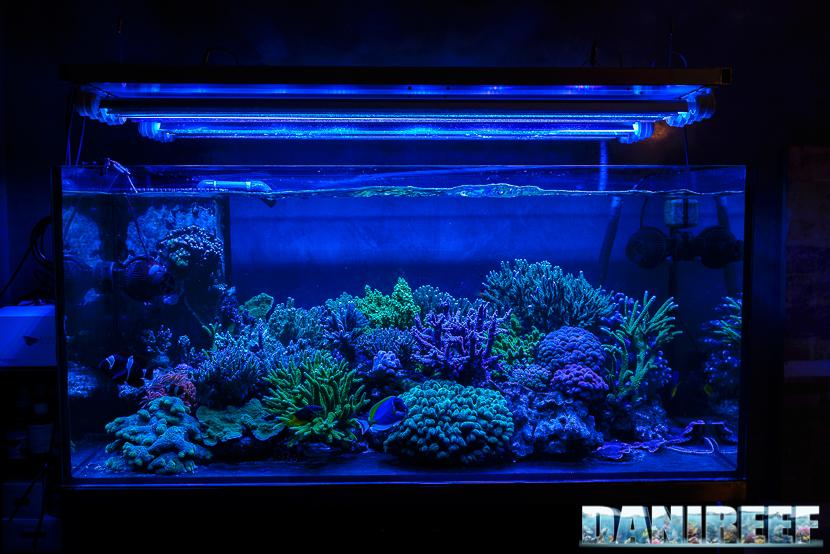 L'Acquario di Massimiliano Ghelfi visione a luce blu