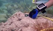 Alcuni ricercatori hanno trovato come far crescere i coralli 25 volte più velocemente